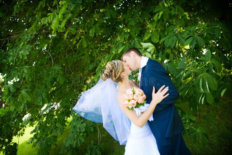 Kuss der Braut und des Bräutigams lizenzfreie stockfotos