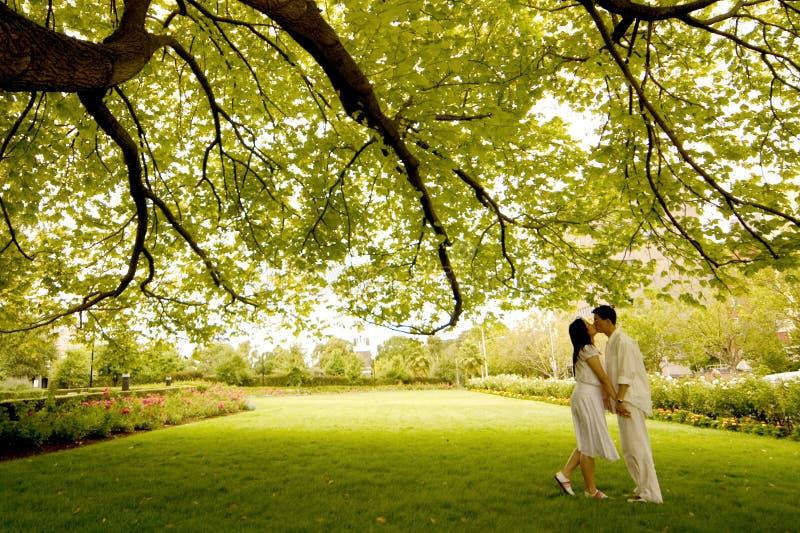 Kuss unter dem Baum stockbilder