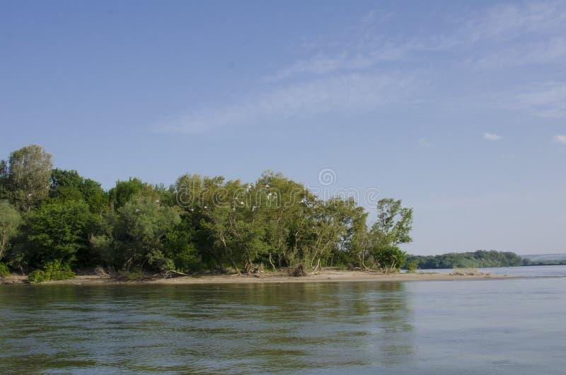 Kust av den Belene ön på Danube River fotografering för bildbyråer
