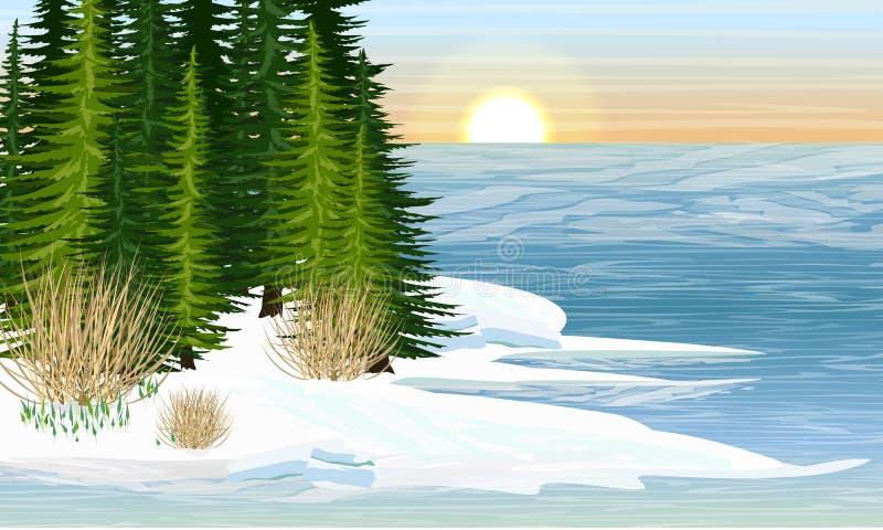 Kust av en skogsj? V?r Sm?ltande is, de f?rsta sn?dropparna royaltyfri illustrationer