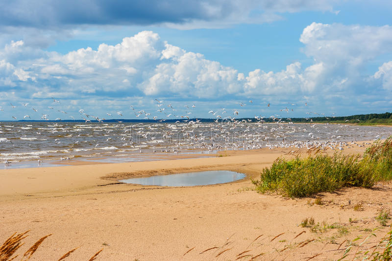 Kust av Laket Peipus. Estland fotografering för bildbyråer
