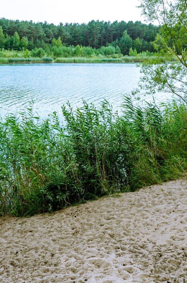 Kust av sjön arkivfoton