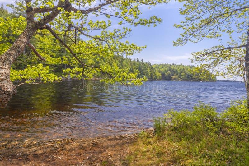 Kust av sjön royaltyfria foton