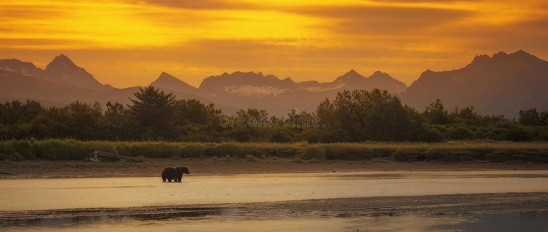 Kust- brunbjörn royaltyfria foton