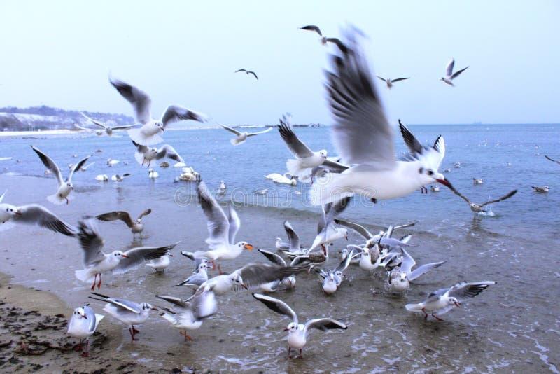 Kust- fåglar royaltyfri foto