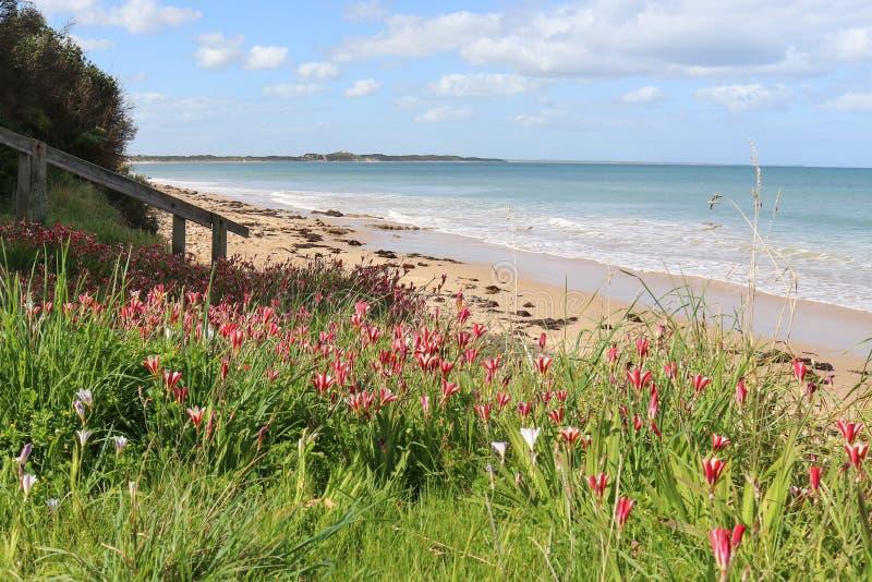 Kust- flora på strandremsan av en australisk strand arkivbild