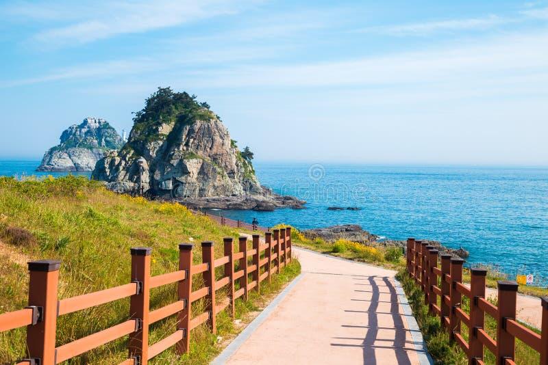 Kust- går, Oryukdo öar på våren i Busan, Korea royaltyfri foto