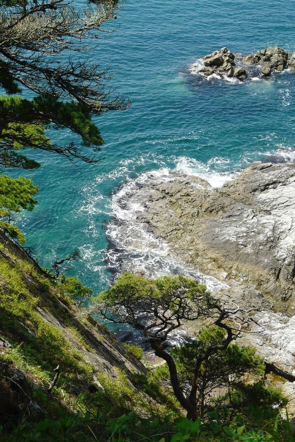 Kust gebogen pijnbomen op de rotsen boven het schilderachtige overzees die op de klippen rollen stock foto