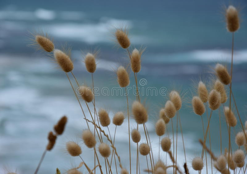 Kust- gräs på kusten royaltyfri bild