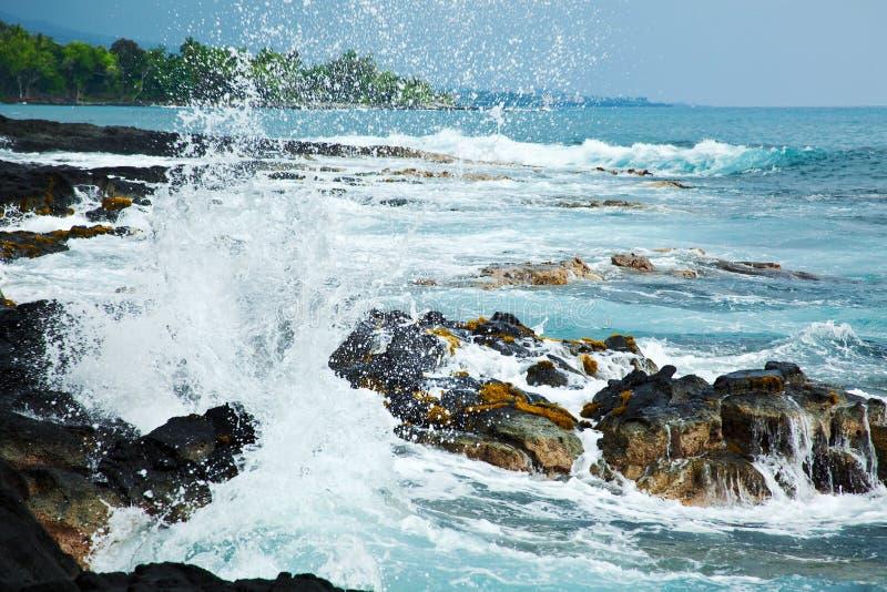 kust hawaii arkivbild