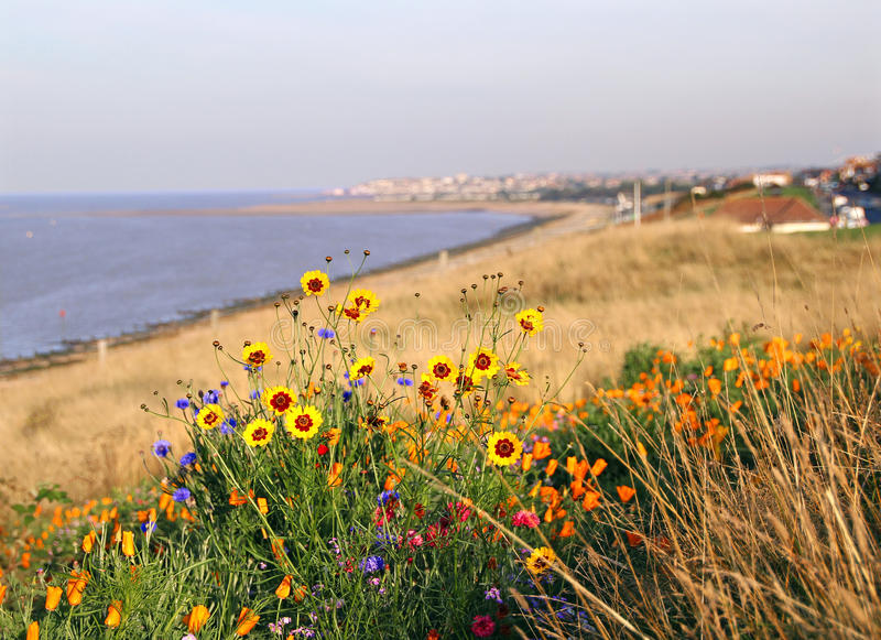 Kust- lösa blommor arkivfoto