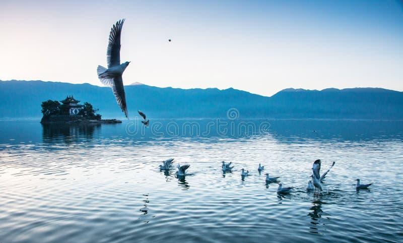 Kust- landskap av erhaisjön royaltyfri foto