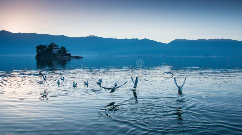 Kust- landskap av erhaisjön royaltyfri fotografi
