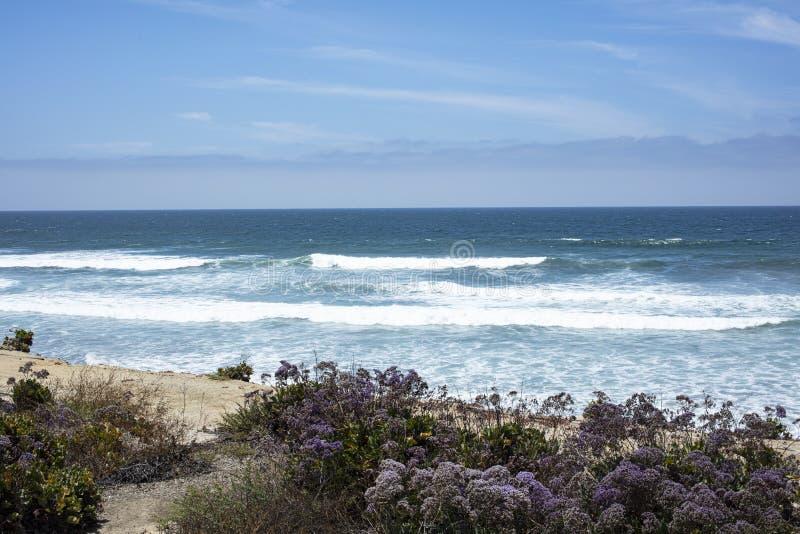 Kust- landskapsikt av havslavendel royaltyfri fotografi