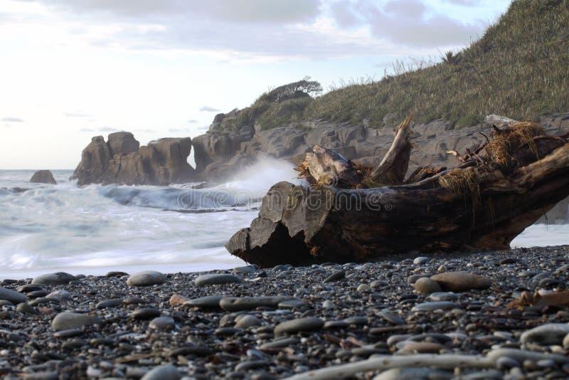 kust New Zealand fotografering för bildbyråer