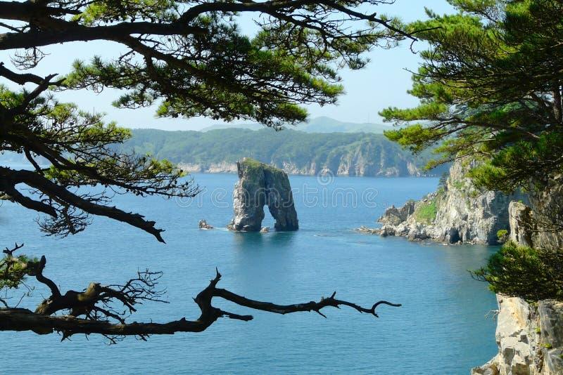 Kust- sörja träd på ett ensamt vaggar anseende i mitt av havet, royaltyfri fotografi