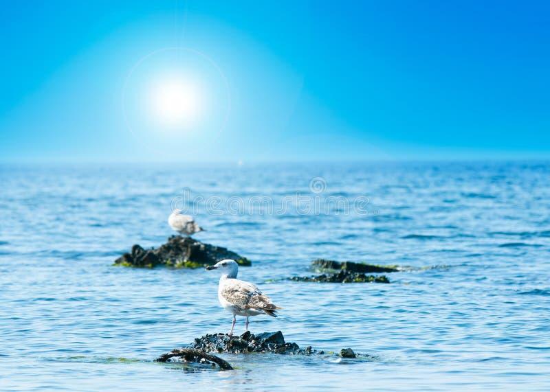 kust- sikt fotografering för bildbyråer