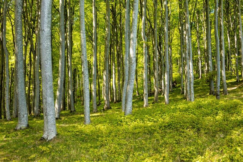 Kust- skog royaltyfri foto