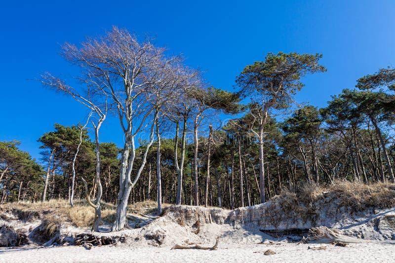 Kust- skog på Östersjön arkivbilder