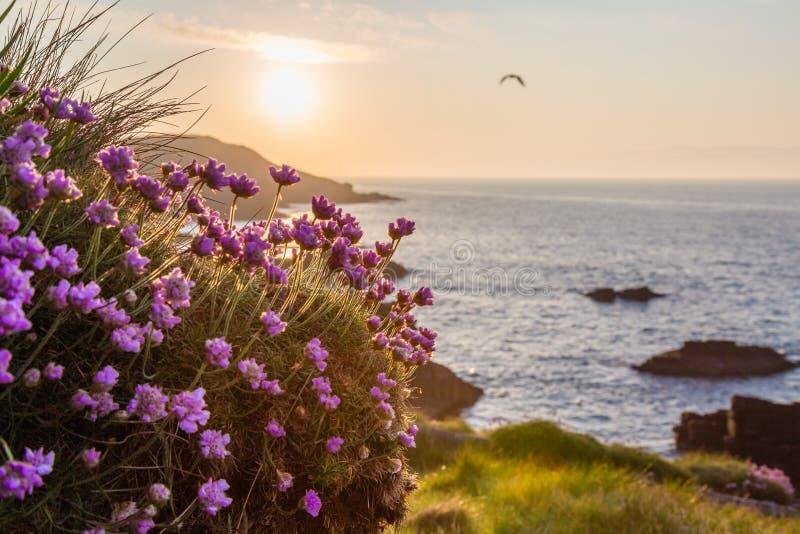 Kust- soluppgång med blommor i förgrunden royaltyfria foton