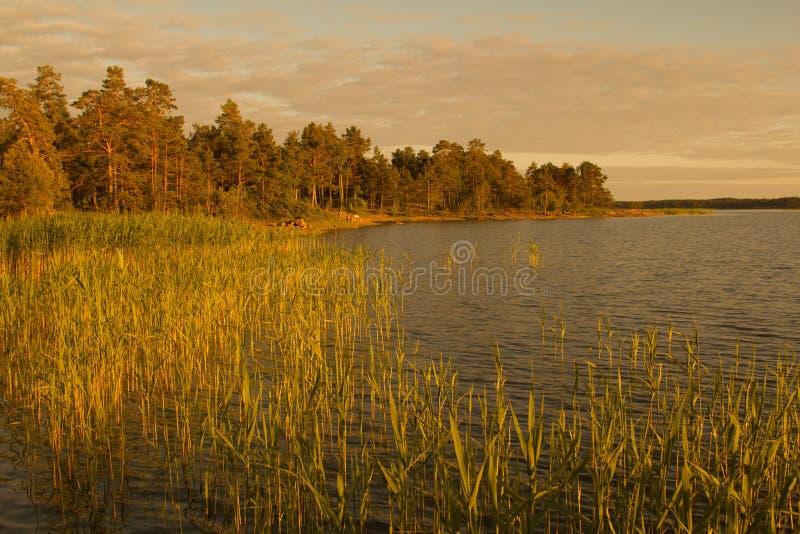 Kust van Aland (Finland) door de het plaatsen zon wordt verlicht die royalty-vrije stock afbeelding