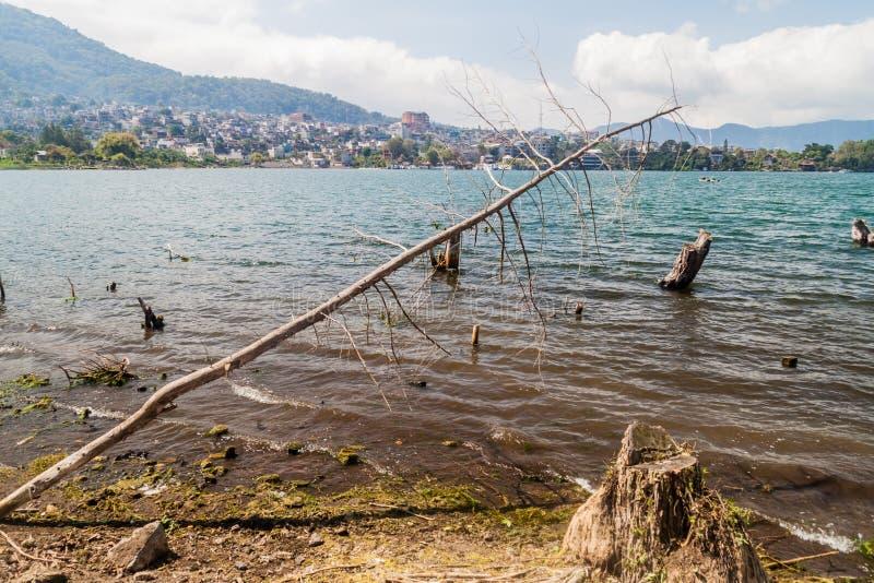 Kust van Atitlan-meer, Guatemala Toenemende niveaus van dit meer die onderdompeling van bomen veroorzaken Santiago Atitlan-dorp royalty-vrije stock foto