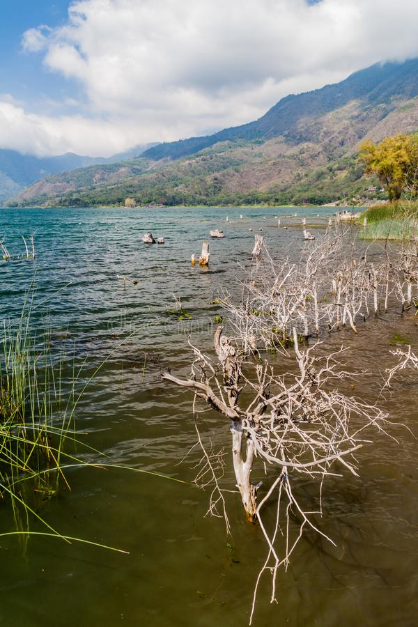 Kust van Atitlan-meer, Guatemala Toenemende niveaus van dit meer die onderdompeling van boom veroorzaken stock afbeelding