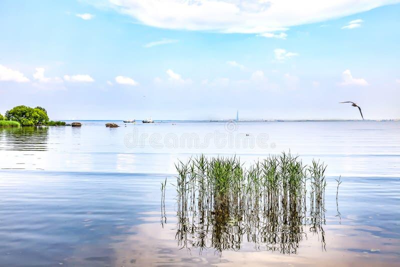 Kust van de Golf van Finland royalty-vrije stock fotografie