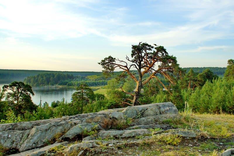Kust van het bosmeer Water, pijnboom en rotsen Zonnige dag, de zomer, de Indische zomer van augustus stock foto