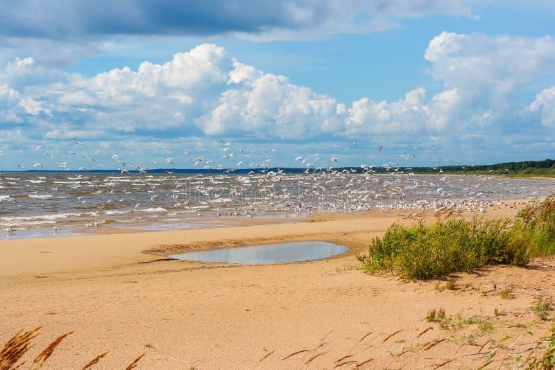 Kust van het Meer Peipus. Estland stock afbeelding