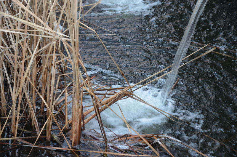 Kust- vass och sjövatten fotografering för bildbyråer