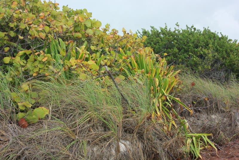 Kust- vegetation i Florida tangenter arkivfoto