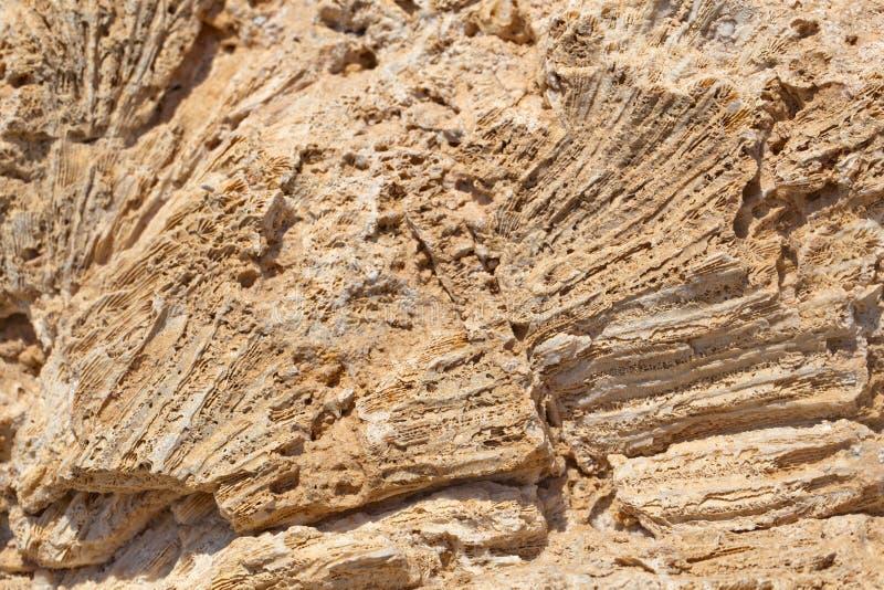 Kust verouderd kalksteen royalty-vrije stock fotografie