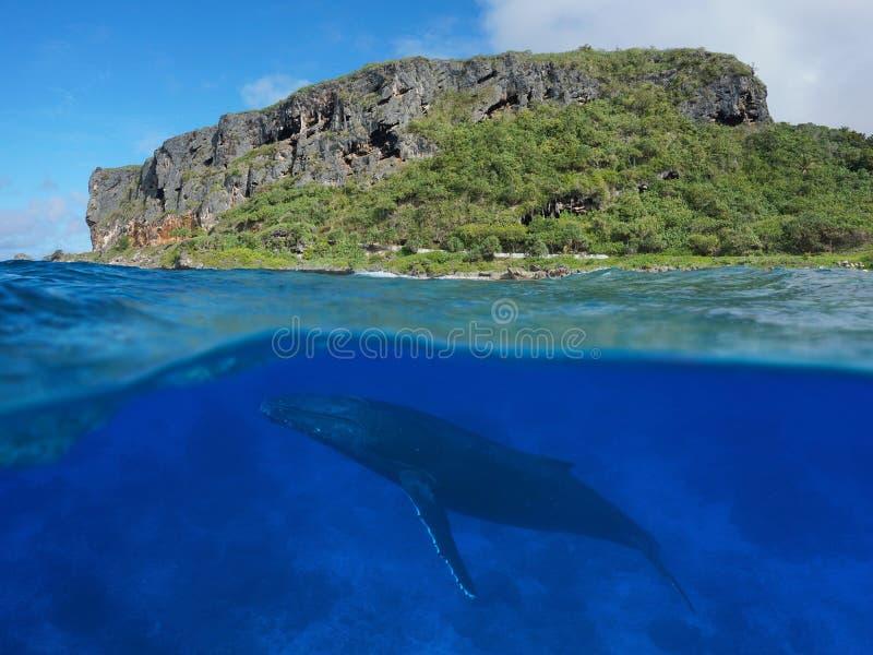Kustdieklip met walvis onderwateroverzees wordt verdeeld stock fotografie