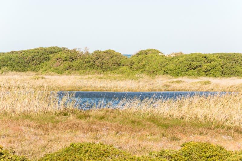 Kustduin natuurreservaat op de kustlijn van Ostuni in Salento op het Adriatische overzees stock afbeeldingen