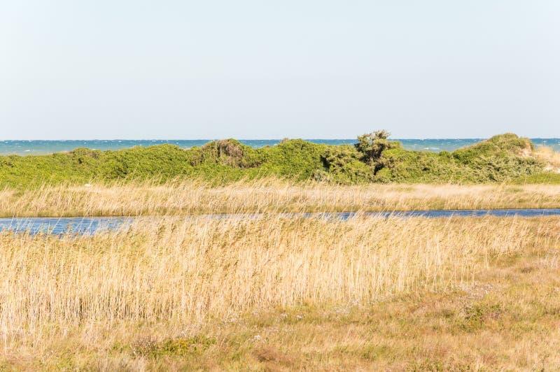 Kustduin natuurreservaat op de kustlijn van Ostuni in Salento op het Adriatische overzees royalty-vrije stock fotografie