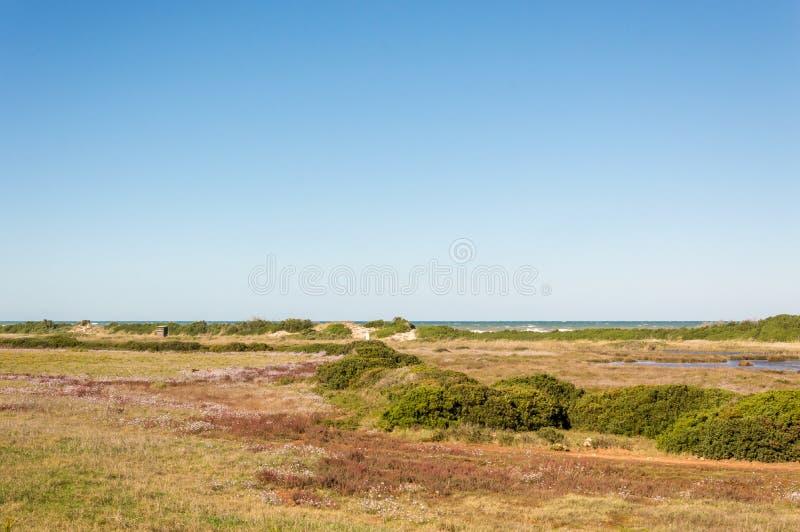 Kustduin natuurreservaat op de kustlijn van Ostuni in Salento op het Adriatische overzees stock foto
