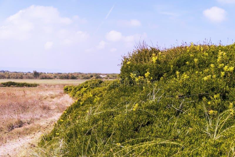Kustduin natuurreservaat op de kustlijn van Ostuni in Salento op het Adriatische overzees stock afbeelding