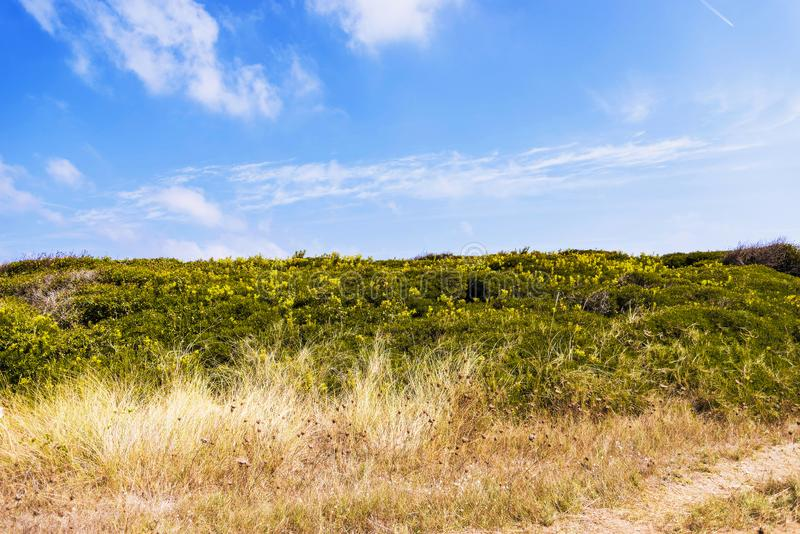 Kustduin natuurreservaat op de kustlijn van Ostuni in Salento op het Adriatische overzees royalty-vrije stock afbeeldingen