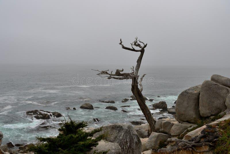 Kustlijn langs de 17 Mijlaandrijving in donkere dag californië royalty-vrije stock foto's