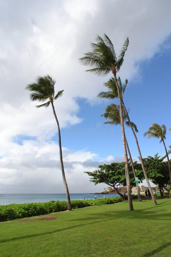 Kustlijn van Maui stock foto