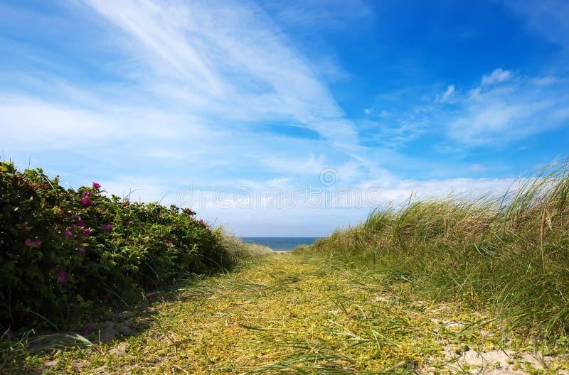 Download Kustlinje fotografering för bildbyråer. Bild av gräs - 78730815