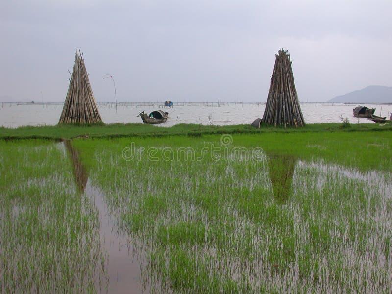 Download Kustlinje vietnam fotografering för bildbyråer. Bild av fält - 37699