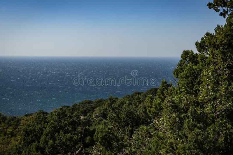 Kustlinjen som är bevuxen med ljusa gräsplaner av gamla en Det blåa havet går in i den blåa molnfria himlen Selektivt fokusera arkivbild