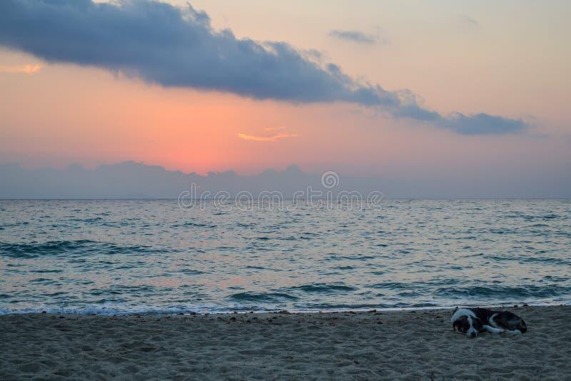 Kustotta sova för strandhund Grekland royaltyfri fotografi