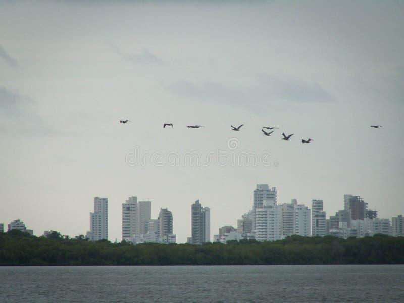 Kustvogels Cartagena stock afbeeldingen
