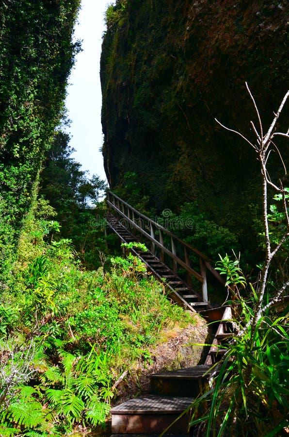 Kustweg in Groot Barrièreeiland stock afbeeldingen