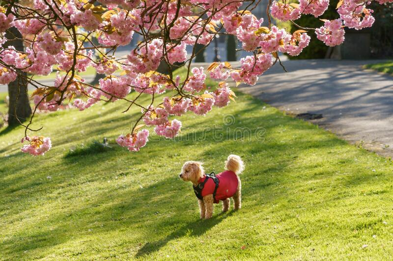 Kute Little Puppy out for a Walk in Park stock foto