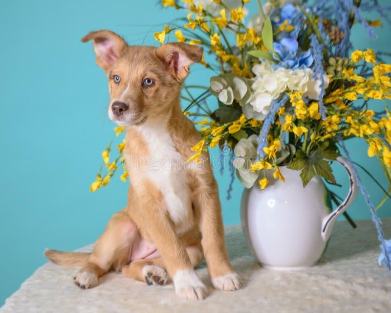 Kute puppy op blauwe achtergrond royalty-vrije stock foto's