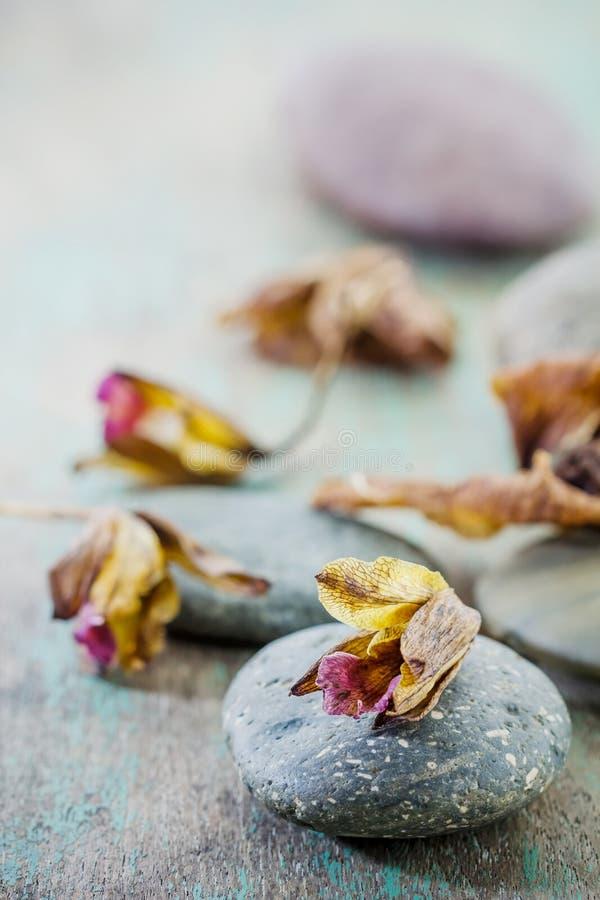 Kuuroordconcept met zenstenen en orchidee royalty-vrije stock foto's